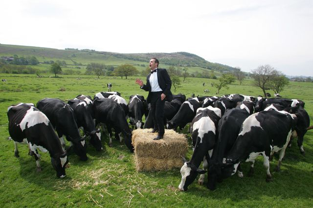 A las vacas les gusta el Jazz