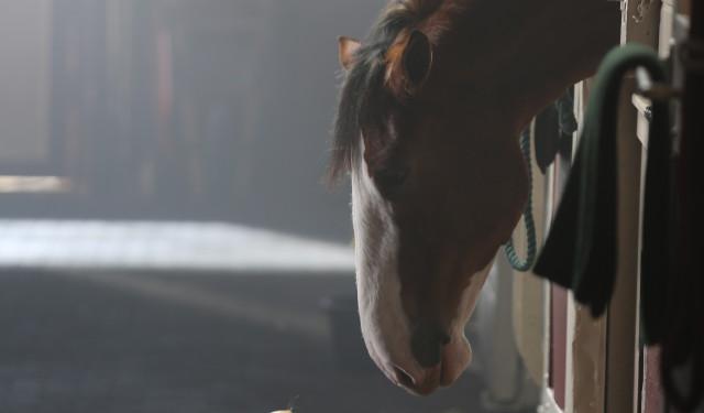 El anuncio de Budweiser para Super Bowl protagonizado por un perrito y un caballo