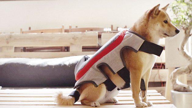 The Posting Tail: Los perros ya comparten qué le gusta en Facebook